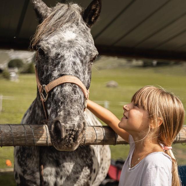 Pony - Donkey