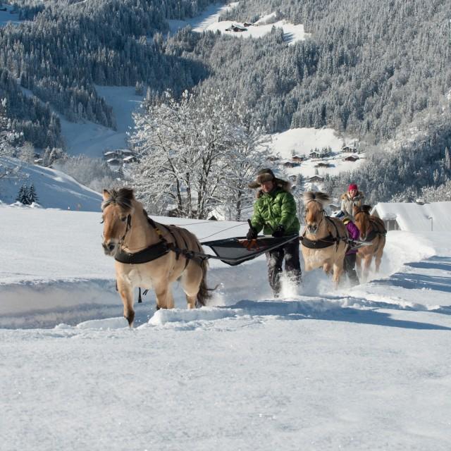 Horse-drawn sleigh rides, pony slegding, ski joering