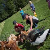 Atelier p'tits fermiers - volailles